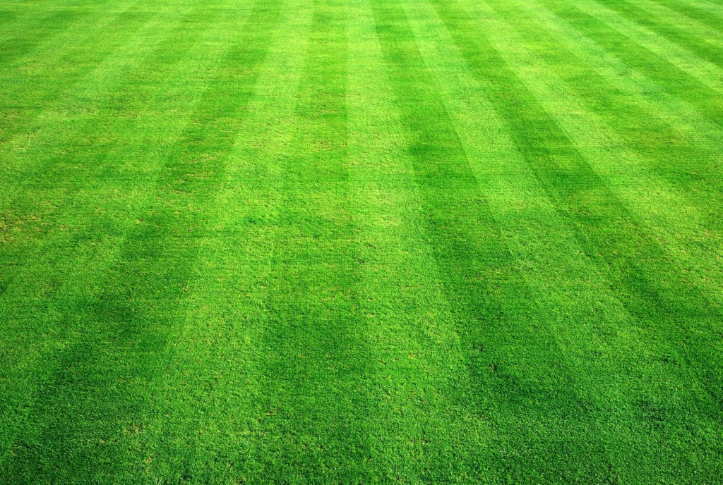 Green gras, soccer pitch